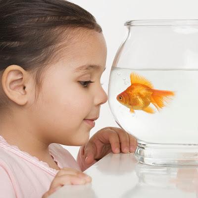 Mascotas para niños: los peces
