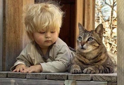 Mascotas para los niños: los gatos